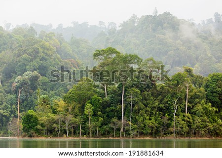 Dense tropical forest in the Chiew Lan Lake, south Thailand - stock photo