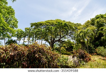 Dense tropical trees in a lush rain forest