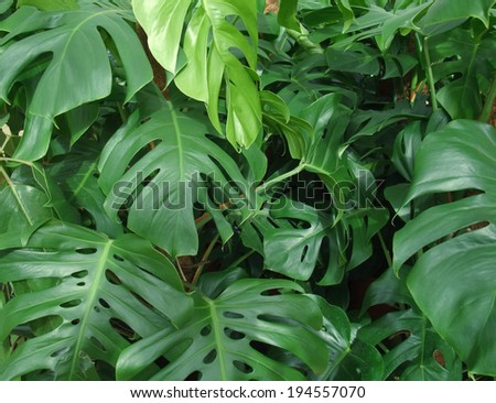 dense vegetation of foliage plants - stock photo