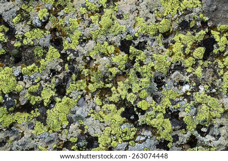 Densely covered with lichen rock, No.2. Natural texture: lichen on stone - stock photo