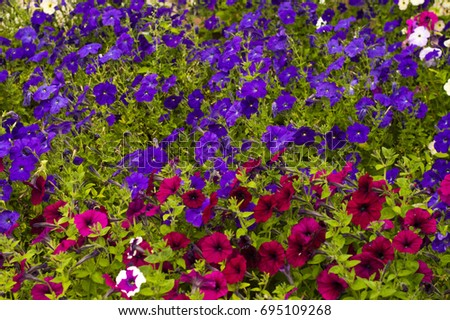 densely growing flowers in a large number of multi-colored
