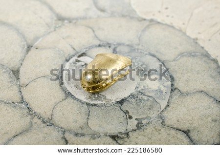 dental gold with ammonite - stock photo