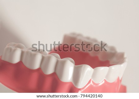 Dental human teeth model on a white background
