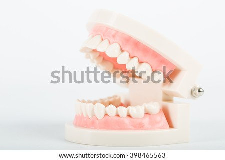 Dental implant model for clean your tooth.