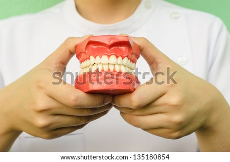 Dentist holding a teeth model - stock photo