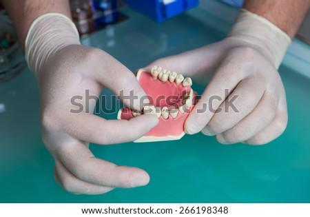 Dentist showing dental gypsum model - stock photo