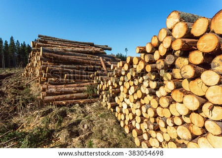 Depots for timber in the woods - stock photo