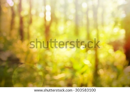 Depth of tropical forest with magical sunlight passing between the trees. - stock photo
