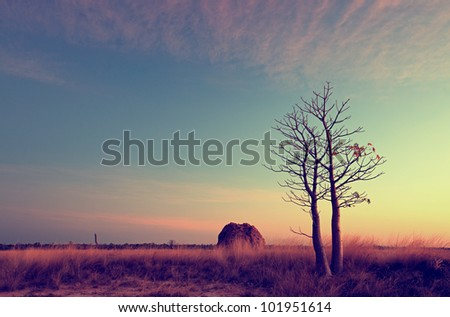 Derby Mudflats, at Sunset - stock photo