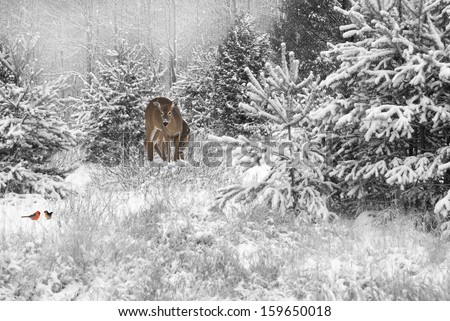 Desaturated Christmas card background with a mother deer and baby and a pair of colorful cardinals in the snow in the meadow.  - stock photo