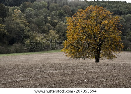 Desaturized photo of an orange tree in a ploughed field