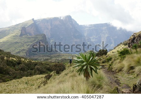 Descent to Chenek camp,in background  Shayno Shefer peak, Imet Gogo peak and Inatye peak, Simien mountains, Ethiopia ,