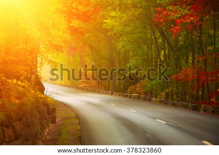 Desert asphalted road leaving for turn in the autumn forest. Bright yellow and red leaves, bend and sunshine in autumn day.  - stock photo