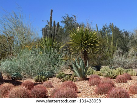 Desert Cactus Garden in Phoenix - stock photo
