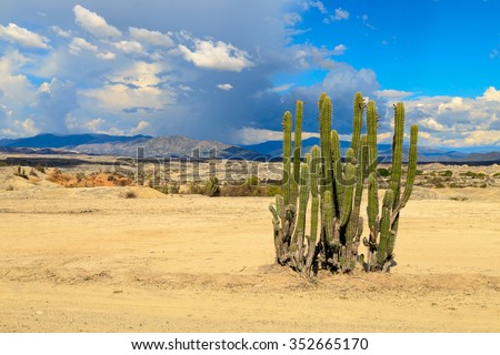 desert, cactus in desert, tatacoa desert, columbia, latin america, clouds and sand, red sand in desert, cactus - stock photo