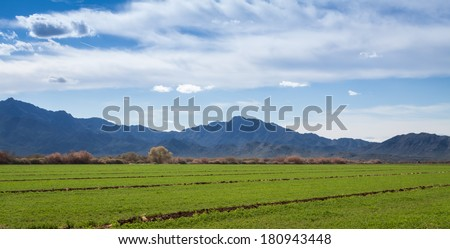 Desert farm in Phoenix Az with South Mountain in the background