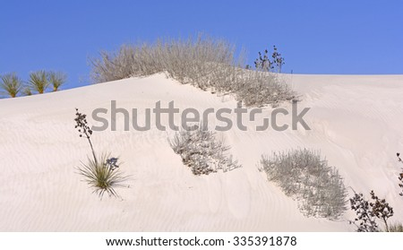 Desert Flora on the Sand Dunes in White Sands National Monument in New Mexico - stock photo
