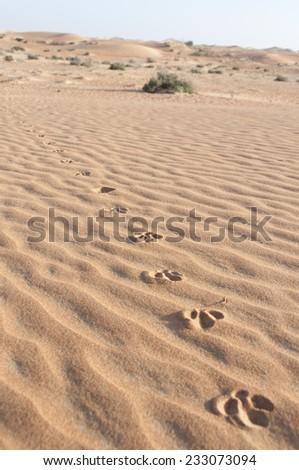 Desert foot prints of bird in Dubai, UAE - stock photo