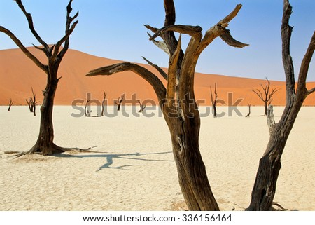 desert in Namibia Desert With Dead Trees - stock photo