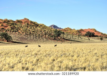 Desert landscape in the NamibRand Nature Reserve in Namibia.