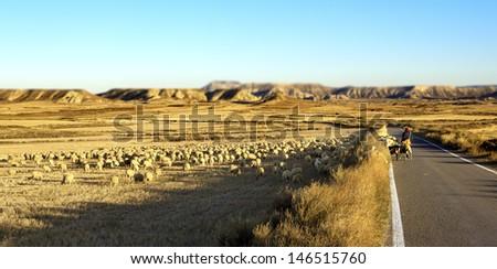 desert landscape. Shepherd and flock of sheep - stock photo