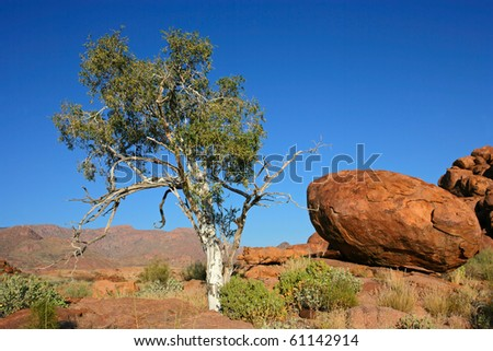Desert landscape with a tree, granite rocks and blue sky, Namibia, southern Africa - stock photo