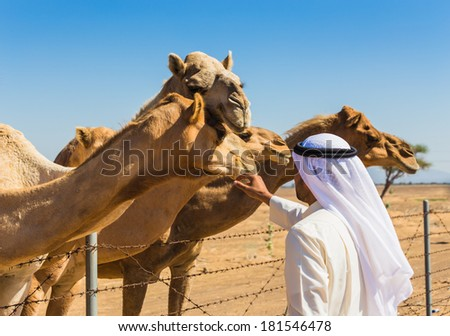 Desert landscape with camel. Sand, camel and blue sky with clouds ...