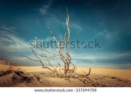 Desert landscape with dead plants in sand dunes under sunny sky. Global warming concept. Nature background - stock photo