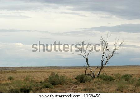 Desert life - stock photo