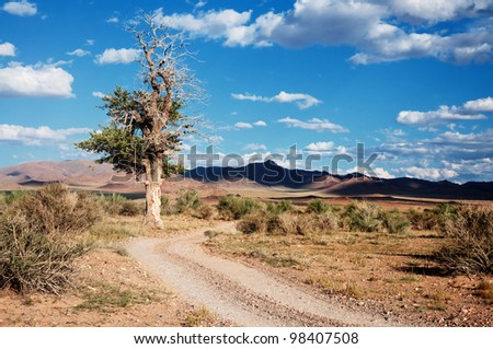 Desert mountain road and old tree in Mongolia - stock photo