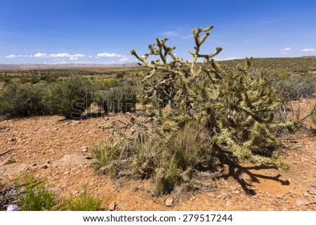 Desert of Arizona State, in Grand Canyon area - stock photo