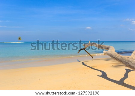 Desert Paradisiac beach in Phuket Thailand with coconut tree