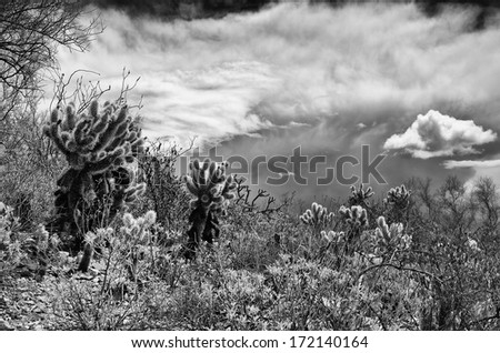 Desert plants against a dramatic sky are highlighted by a low sun during an approaching storm. - stock photo