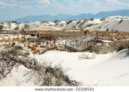 desert plants on white sand dunes - stock photo
