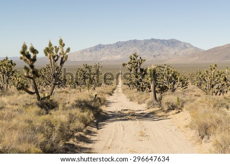 Desert road. Joshua tree National Park  - stock photo