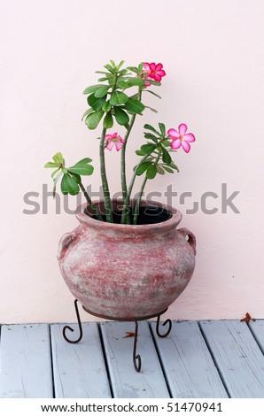 Unique Bicycle Planter Flowers Stock Photo 1494926