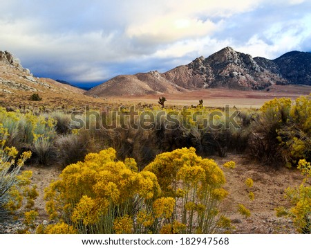 Desert scene in Fall colors and overcast sky - stock photo