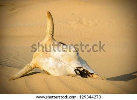 Desert skull, sand desert - stock photo