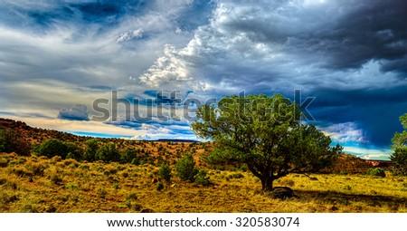 Desert Storm with tree landscape photo.Utah, USA - stock photo