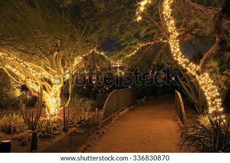 Desert trees decorated with festive lights for the Christmas holiday season. - stock photo