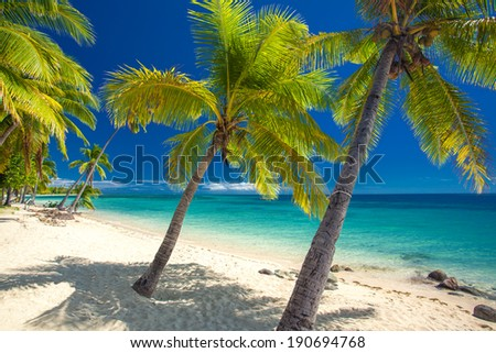 Deserted beach with coconut palm trees on Fiji Islands - stock photo