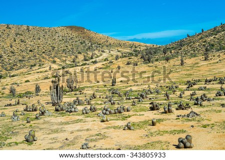 Deserted landscape with cactus in Parque Nacional Pan de Azucar, Chile
