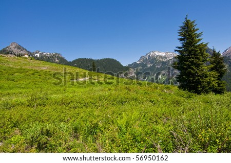Deserted ski slope in the summer covered with beautiful wildflowers and snow covered mountain peaks in the background on a sunny day in western Washington.