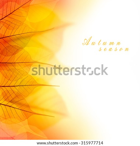 Design Border of Autumn dry Leaves on white background - stock photo