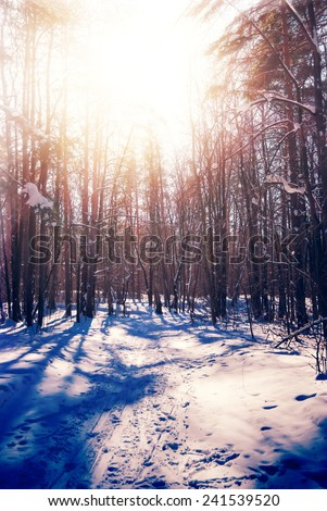 design element. hi-res image. winter forest - stock photo