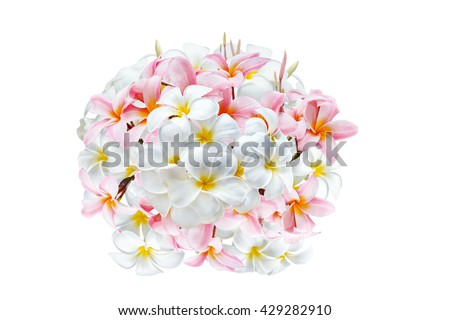 Design of plumeria flower arranged into bouquet isolated on white background - stock photo
