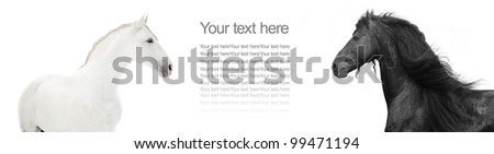 design of website header with black and white horses - stock photo
