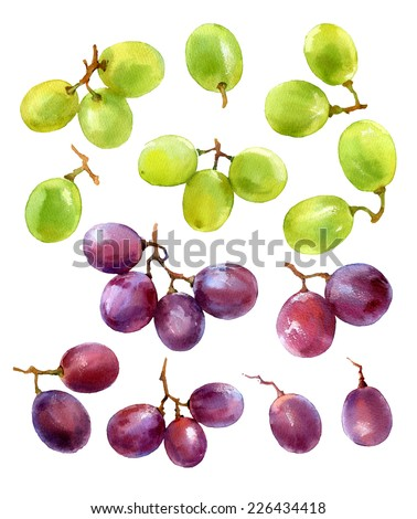 design set of watercolor white and red grapes