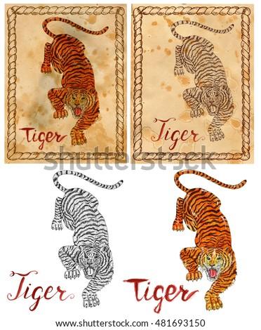 Chinese Tiger Illustra...