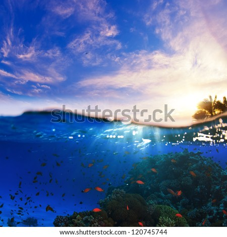 design template. underwater part with coral reef and tropical sunset skylight splitted by waterline - stock photo